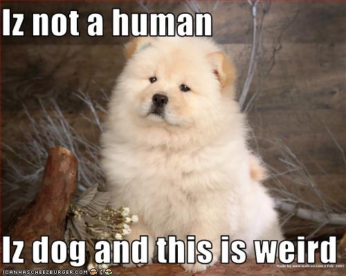 Iz not a human Iz dog and this is weird - Cheezburger - Funny Memes | Funny  Pictures