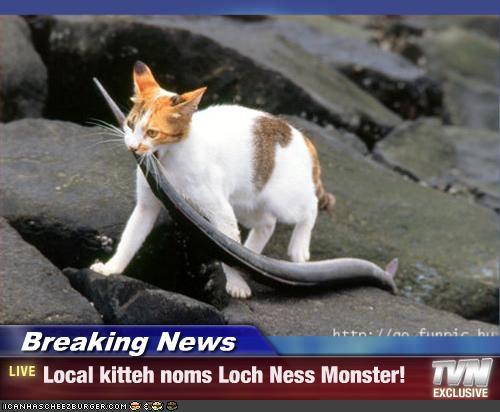 Breaking News Local Kitteh Noms Loch Ness Monster