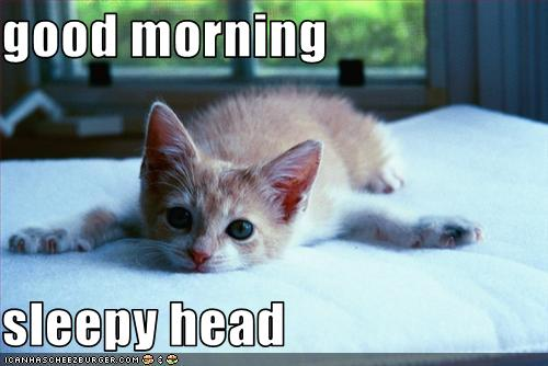 good morning sleepy head - Cheezburger - Funny Memes