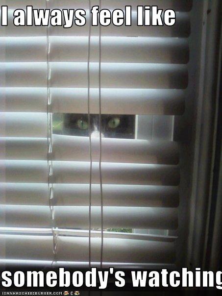 I Always Feel Like Somebody S Watching Me Cheezburger