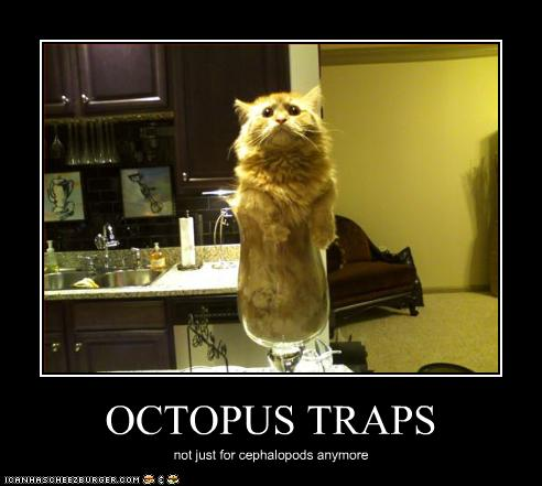 OCTOPUS TRAPS - Cheezburger - Funny Memes  Funny Pictures