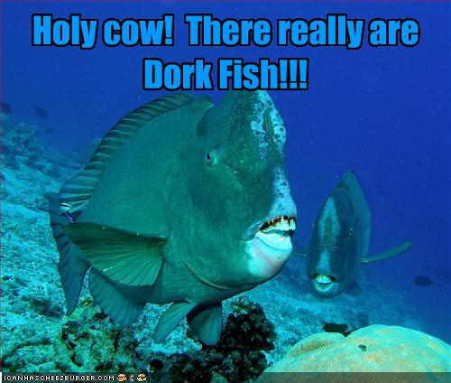 Holy Cow! There Really Are Dork Fish!!!