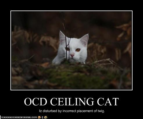 Ocd Ceiling Cat Cheezburger Funny Memes Funny Pictures