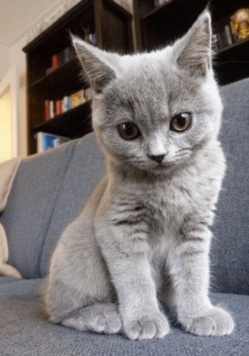 22 Purr-fect Pictures Of Cats That Will Make You Just Say ...