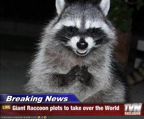 Breaking News Giant Raccoon Plots To Take Over The World