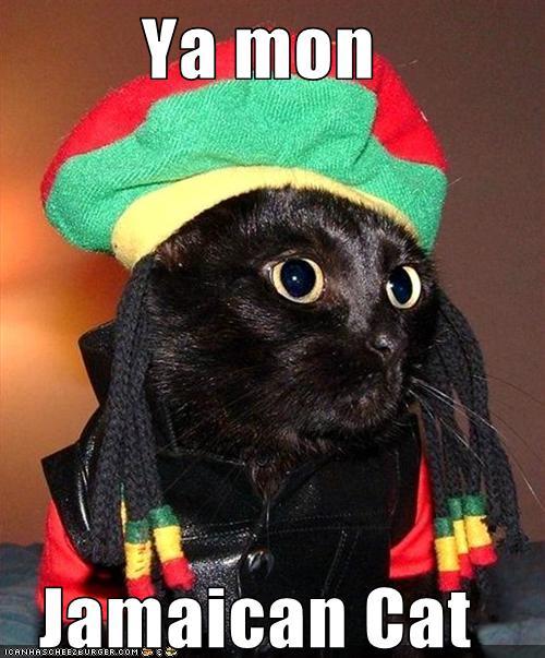 Ya mon Jamaican Cat - Cheezburger - Funny Memes | Funny ...