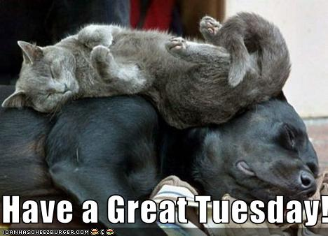 Image result for have a great tuesday