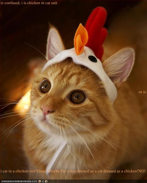 Iz Confused I Is Chicken In Cat Suit Or Is I Cat In A
