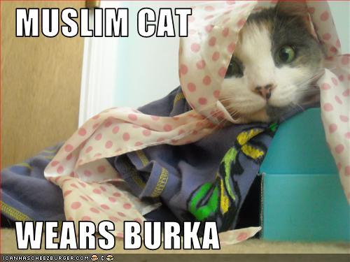 Muslim Cat Wears Burka Cheezburger Funny Memes Funny