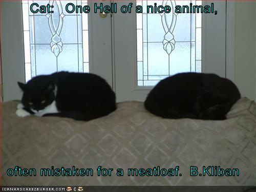 Cat: One Hell of a nice animal, often mistaken for a ...