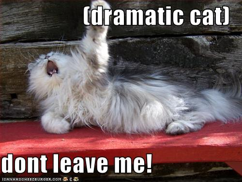 (dramatic cat) dont leave me! - Cheezburger - Funny Memes ...