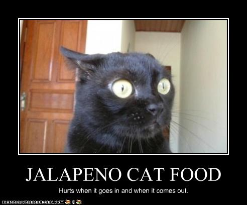 Jalapeno Cat Food Cheezburger Funny Memes Funny Pictures