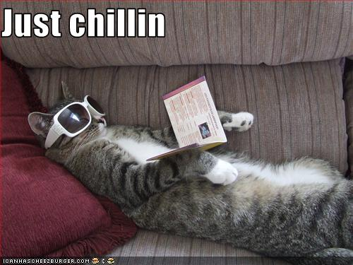 Just Chillin Cheezburger Funny Memes Funny Pictures