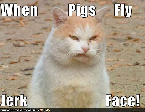 When Pigs Fly Jerk Face Cheezburger Funny Memes Funny Pictures