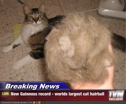 breaking news new guinness record worlds largest cat
