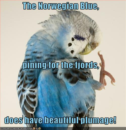 The Norwegian Blue Pining For The Fjords Does Have Beautiful Plumage Cheezburger Funny Memes Funny Pictures