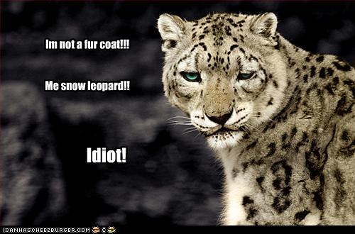 im not a fur coat me snow leopard cheezburger
