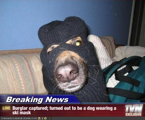 Breaking News Burglar Captured Turned Out To Be A Dog