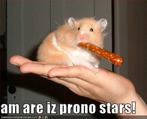 hamster prono