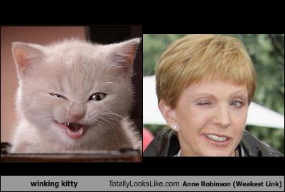 winking kitty totally looks like anne robinson weakest link