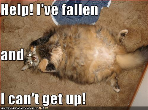 Help I Ve Fallen And I Can T Get Up Cheezburger