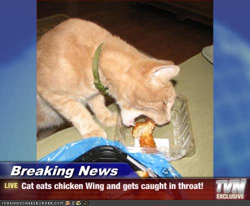 Chicken Wings Funny Meme: Cat Eats Chicken Wing And Gets Caught In