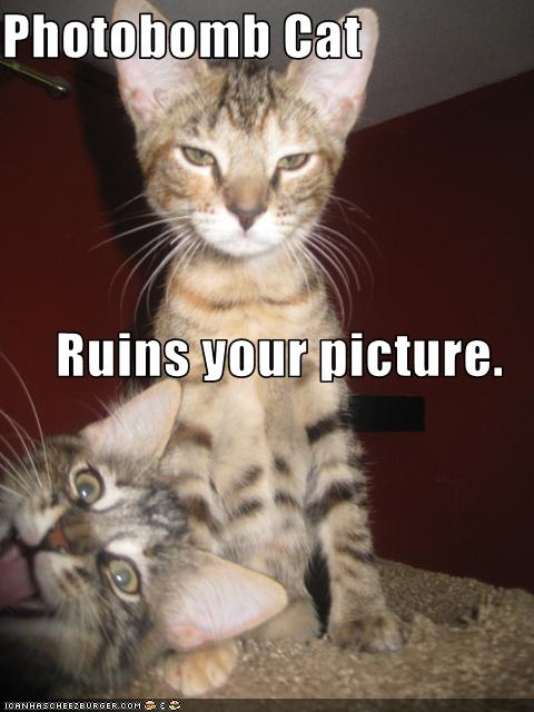 Photobomb Cat Ruins Your Picture Cheezburger Funny