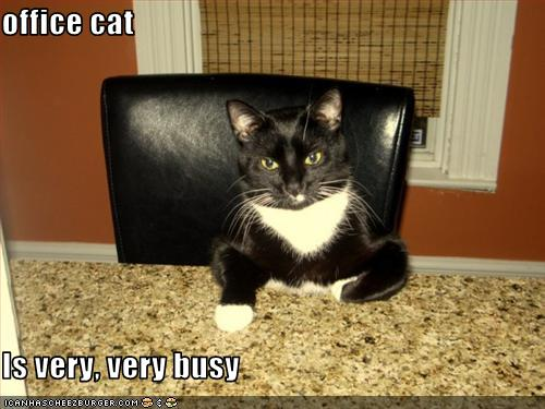 Office Cat Is Very Very Busy Cheezburger Funny Memes