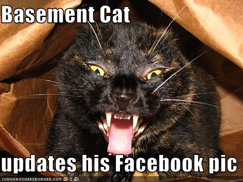 Basement Cat Updates His Facebook Pic Cheezburger