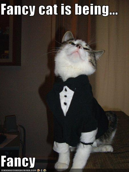 Fancy Cat Is Being Fancy Cheezburger Funny Memes
