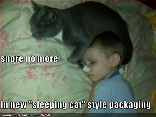 """Funny Quotes About Snoring: Snore No More In New """"sleeping Cat"""" Style Packaging"""
