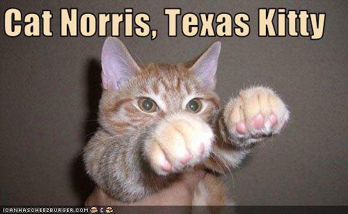 Cat Norris Texas Kitty Cheezburger Funny Memes