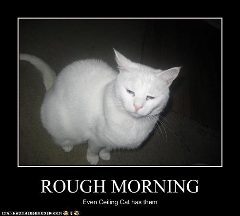 Rough Morning Cheezburger Funny Memes Funny Pictures