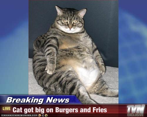 Breaking News - Cat got big on Burgers and Fries ...