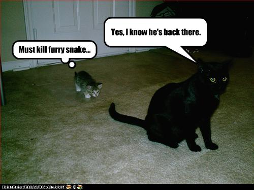Must Kill Furry Snake Cheezburger Funny Memes