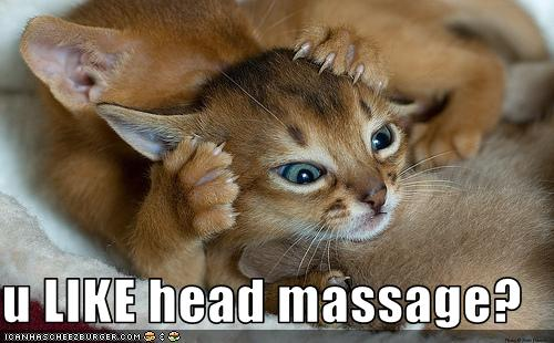 U Like Head Massage Cheezburger Funny Memes Funny