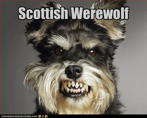 Scottish Werewolf Cheezburger Funny Memes Funny Pictures