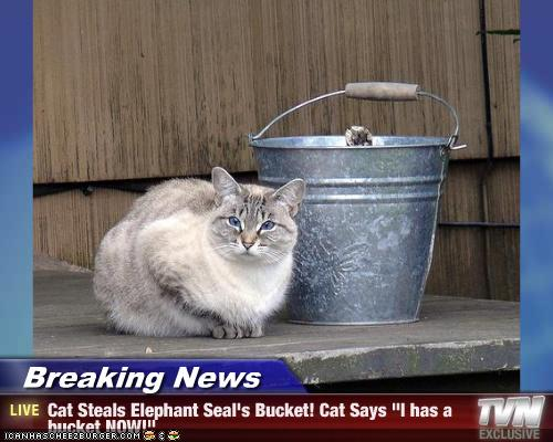 Breaking News Cat Steals Elephant Seal S Bucket Cat