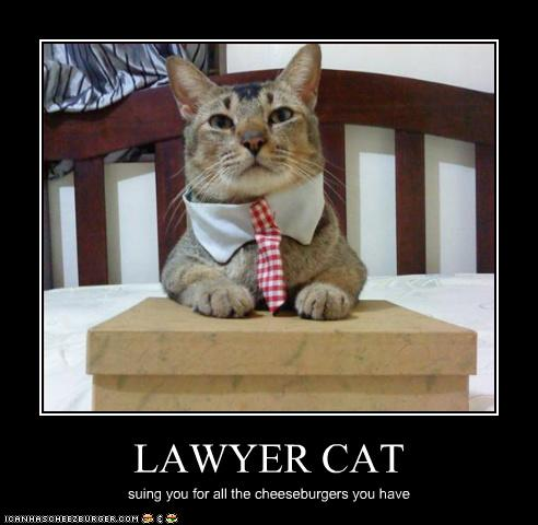Free Dating Sites >> LAWYER CAT - Cheezburger - Funny Memes | Funny Pictures