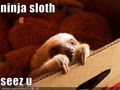 Ninja Sloth Seez U Cheezburger Funny Memes Funny