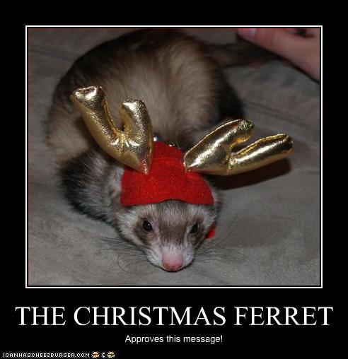 Christmas Ferret.The Christmas Ferret Cheezburger Funny Memes Funny