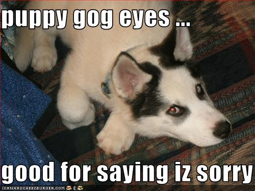 puppy gog eyes     good for saying iz sorry - Cheezburger - Funny