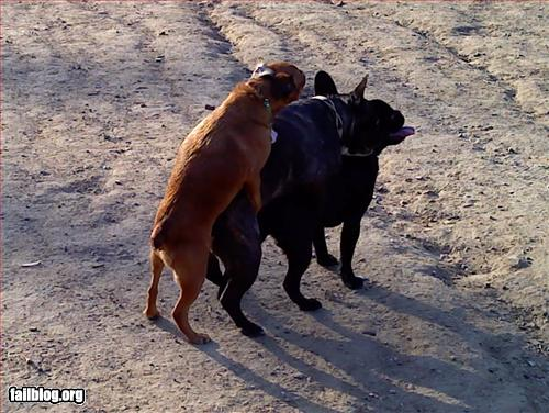 dog-park-threesome-win