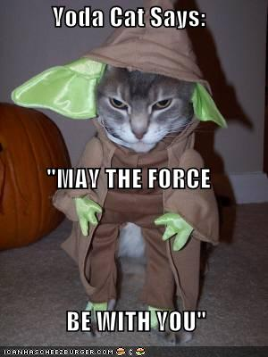 Yoda Cat Says Quot May The Force Be With You Quot Cheezburger