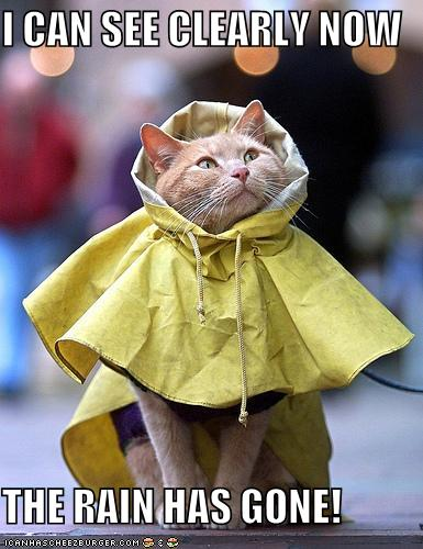 I Can See Clearly Now The Rain Has Gone Cheezburger
