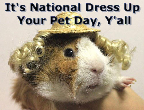 30 Adorable Pets All Dressed Up For National Dress Up Your Pet Day!