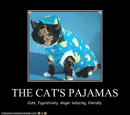 The Cat S Pajamas Cheezburger Funny Memes Funny Pictures