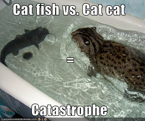 Cat Fish Vs. Cat Cat = Catastrophe