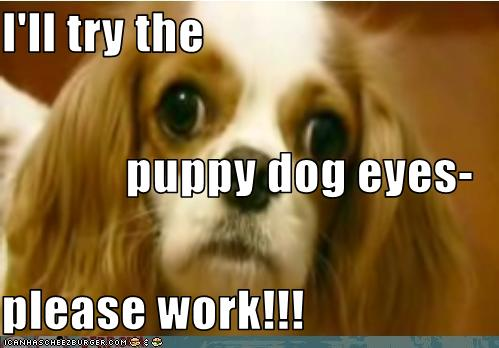 ill try the puppy dog eyes please work cheezburger
