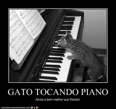 Gato Tocando Piano Cheezburger Funny Memes Funny